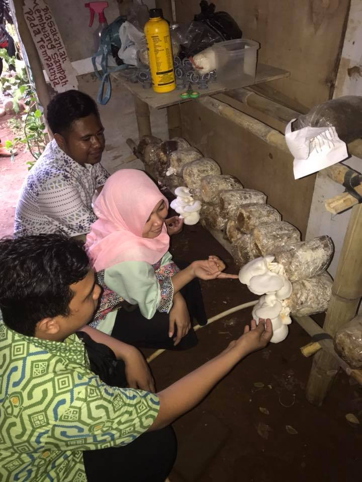 Budidaya Jamur Tiram di Kebun Biologi